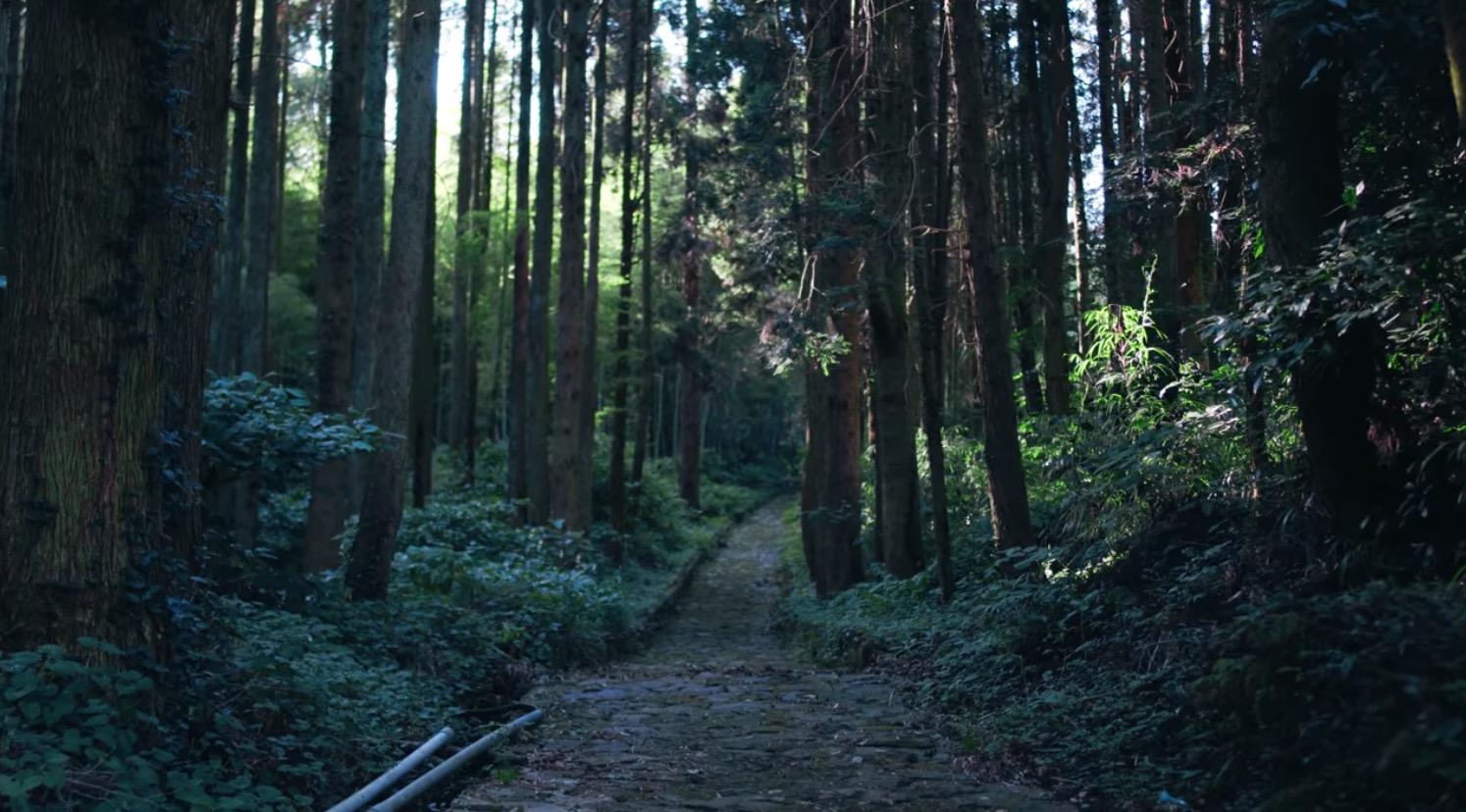 石畳の道について調べてみたよ。夏目漱石も歩いた道ば歩いてきなっせ
